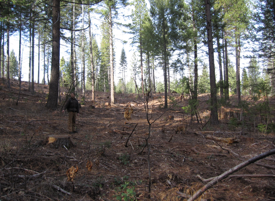 3 Major Ways To Harvest Forests Forest Industry