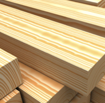 Hardwood vs Softwood - forest industry